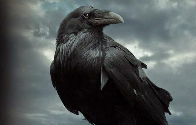 game of thrones corvo