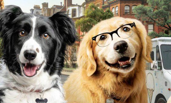 Como Cães e Gatos 3: Peludos Unidos